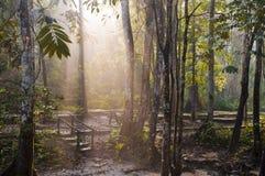 Luz solar da manhã fotografia de stock royalty free