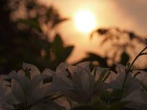 Luz solar da manhã fotografia de stock