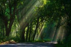 Luz solar da manhã através da névoa Fotos de Stock