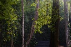 A luz solar da manhã iluminou árvores na luz bonita e na máscara da floresta escura imagens de stock