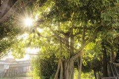 Luz solar da manhã nas florestas tropicais Imagem de Stock Royalty Free