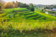 Luz solar da manhã sobre os terraços do arroz Foto de Stock Royalty Free