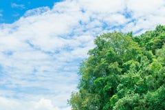 A luz solar da paisagem da montanha da floresta no verão no fundo do céu azul com espaço da cópia adiciona o texto Fotos de Stock Royalty Free