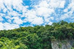 A luz solar da paisagem da montanha da floresta no verão no fundo do céu azul com espaço da cópia adiciona o texto Imagens de Stock