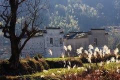 Luz solar das árvores da casa Foto de Stock