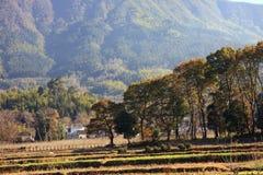 Luz solar das árvores da casa Imagem de Stock Royalty Free