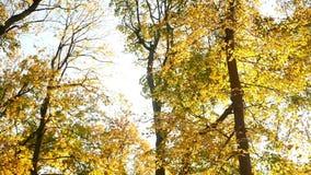 Luz solar das folhas de outono filme