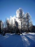 Luz solar de incandescência nas árvores Fotografia de Stock Royalty Free