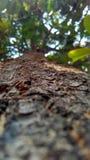 luz solar de madeira dos sentimentos do silêncio do nopeople da natureza da árvore Imagem de Stock Royalty Free