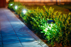 Luz solar do jardim, lanternas na cama de flor Jardim Foto de Stock Royalty Free