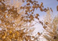 Luz solar do outono através das folhas da queda imagens de stock royalty free