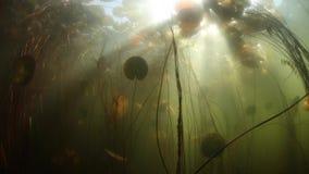 Luz solar e sombras na lagoa de água doce vídeos de arquivo