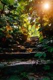 Luz solar em escadas da pedra da floresta Fotos de Stock