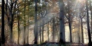 Luz solar em um undergrowth enevoado fotografia de stock royalty free