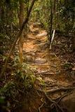 Luz solar em uma fuga da selva através de Koh Rong Sanloem Island, Camboja Imagens de Stock