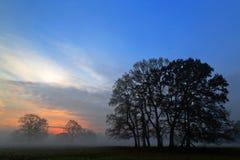 Luz solar enevoada da manhã que mostra em silhueta carvalhos Foto de Stock Royalty Free