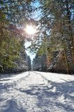 Luz solar entre os ramos das árvores na floresta nevado do inverno Imagem de Stock