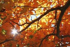 Luz solar, folha de queda imagens de stock royalty free