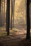 Luz solar na floresta verde, estrada de floresta Imagens de Stock