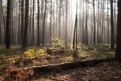 Luz solar na floresta verde, tempo de mola Fotografia de Stock