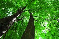 Luz solar na floresta verde, tempo de verão Imagens de Stock