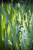 Luz solar na grama em Highland Park Rochester New York fotos de stock