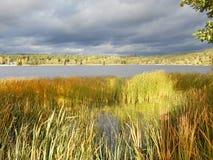Luz solar na grama pela lagoa Imagens de Stock Royalty Free