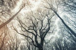 Luz solar na manhã na árvore velha gigante na floresta congelada Fotos de Stock
