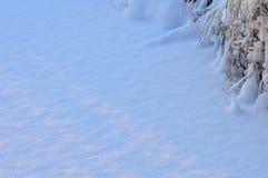Luz solar no inverno em uma manhã branca do frio da tampa de neve Fotografia de Stock