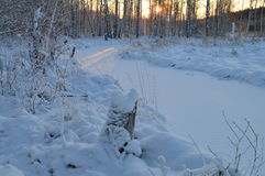Luz solar no nascer do sol da manhã do inverno do rio da floresta da tampa de neve Fotografia de Stock