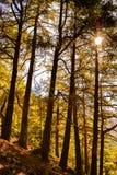 A luz solar penetra a floresta densa do desfiladeiro de Samaria Imagem de Stock