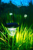 Luz solar pequena do jardim, lanterna na cama de flor Foto de Stock Royalty Free