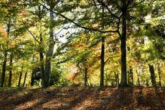 Luz solar que brilha através das árvores Fotos de Stock