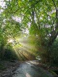 Luz solar que brilha através das árvores na estrada pequena imagens de stock