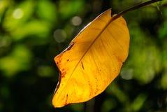 Luz solar que brilha com a licença amarela com fundo verde fotografia de stock royalty free