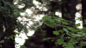 Luz solar que reflete fora de um lago através de uma floresta video estoque