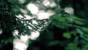 Luz solar que reflete fora de um lago através de uma floresta filme