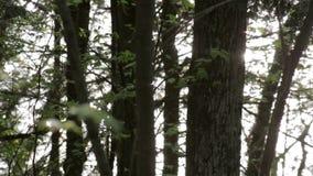 Luz solar que reflete fora de um lago através de uma floresta do norte video estoque
