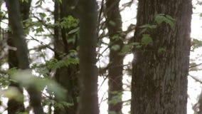 Luz solar que reflete fora de um lago através de uma floresta do norte vídeos de arquivo