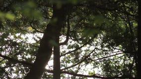 Luz solar que reflete fora de um lago através de uma floresta do norte filme