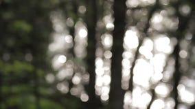 A luz solar que reflete fora de um sumário do lago da floresta borrou o fundo filme