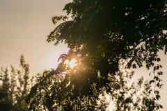 Luz solar sob a árvore Imagens de Stock Royalty Free