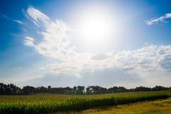 Luz solar sobre um campo de milho Imagens de Stock Royalty Free