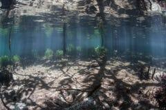 Luz solar, sombras, e floresta dos manguezais Fotografia de Stock Royalty Free