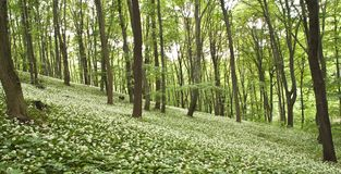 Luz - sonho verde Imagem de Stock