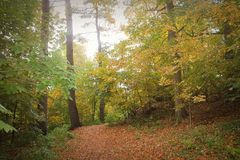 Luz suave a través del bosque en otoño Foto de archivo libre de regalías
