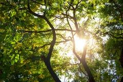 Luz a través de árboles Fotos de archivo libres de regalías