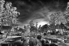 Luz a través de árboles Imágenes de archivo libres de regalías