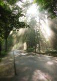 Luz a través de árboles en parque Imagen de archivo libre de regalías