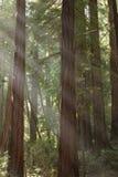 Luz a través de los árboles Imagen de archivo libre de regalías